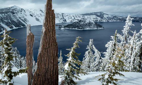 Tree stump, Crater Lake, OR